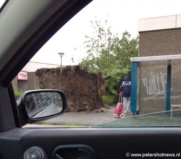 Boom omgevallen bij Eendracht/Hoflandschool Mijdrecht langs de Dukaton