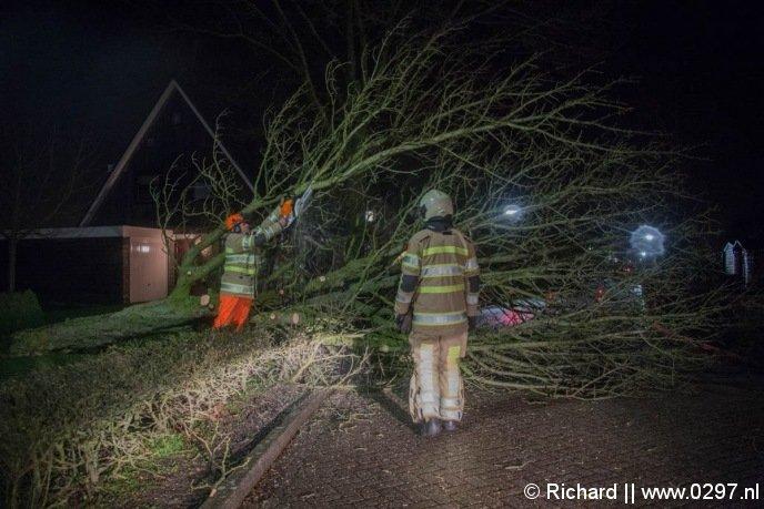 Grote boom over de Hoefijzer in Loenen