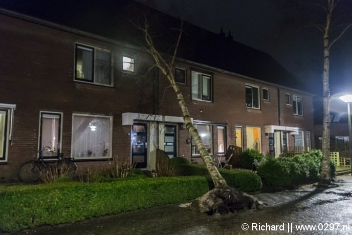 Op de Grondzeiler in Mijdrecht is donderdagavond een boom tegen een woning gewaaid.