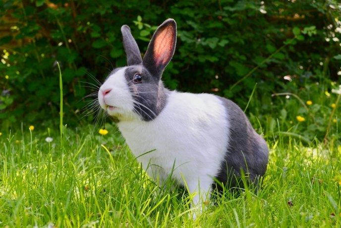 Niet een konijn uit Baambrugge