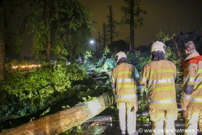 Brandweer begint om alle bomen op de Reigerstraat Vinkeveen weg te halen