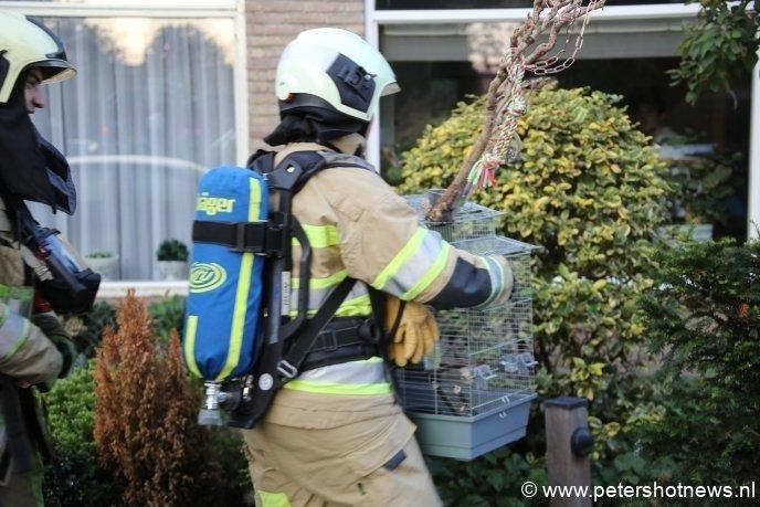 Brandweervrouw brengt een vogel in veiligheid