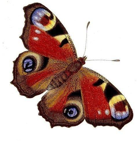 datingsite vlinder Smallingerland